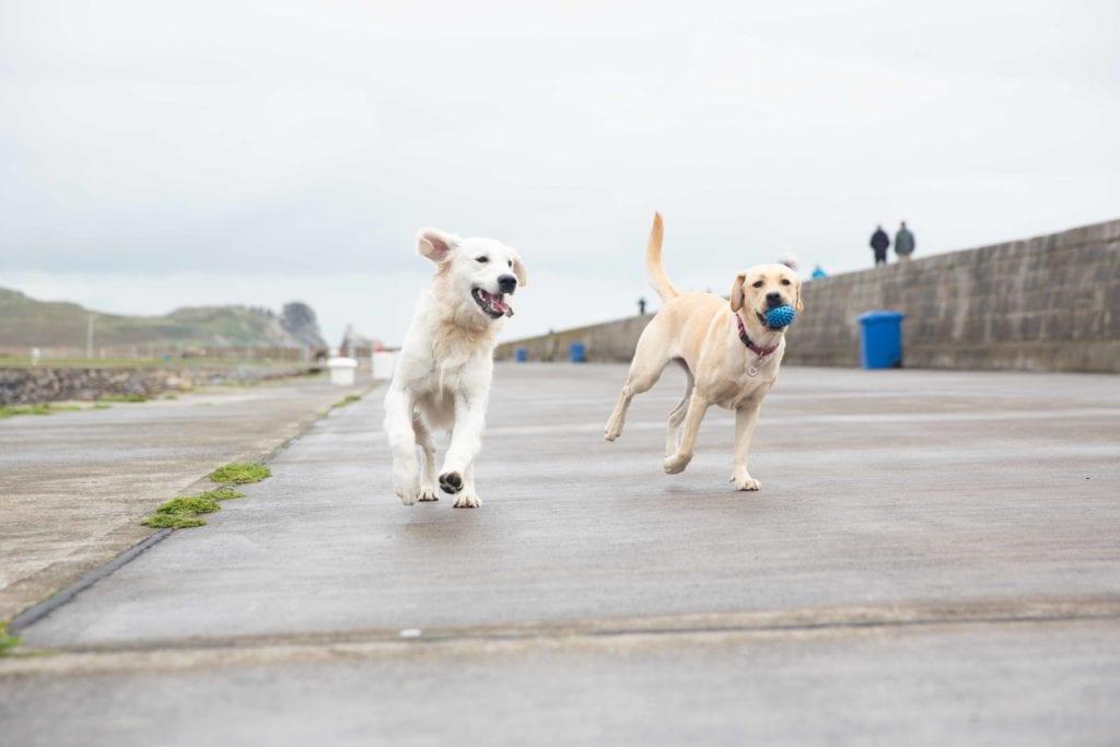Herzkrankheiten bei Hunden