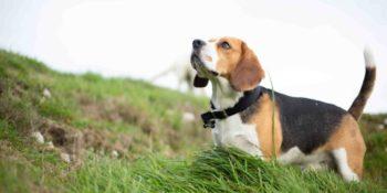 Hundetrockenfutter ohne Getreide