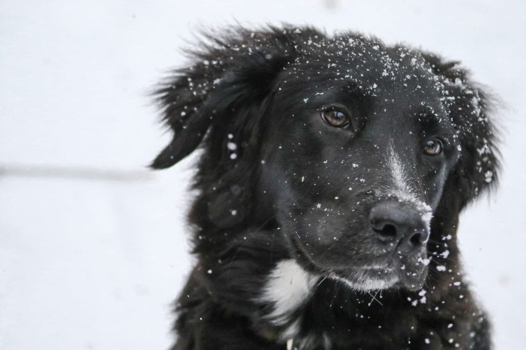 Leckerlies für Hunde