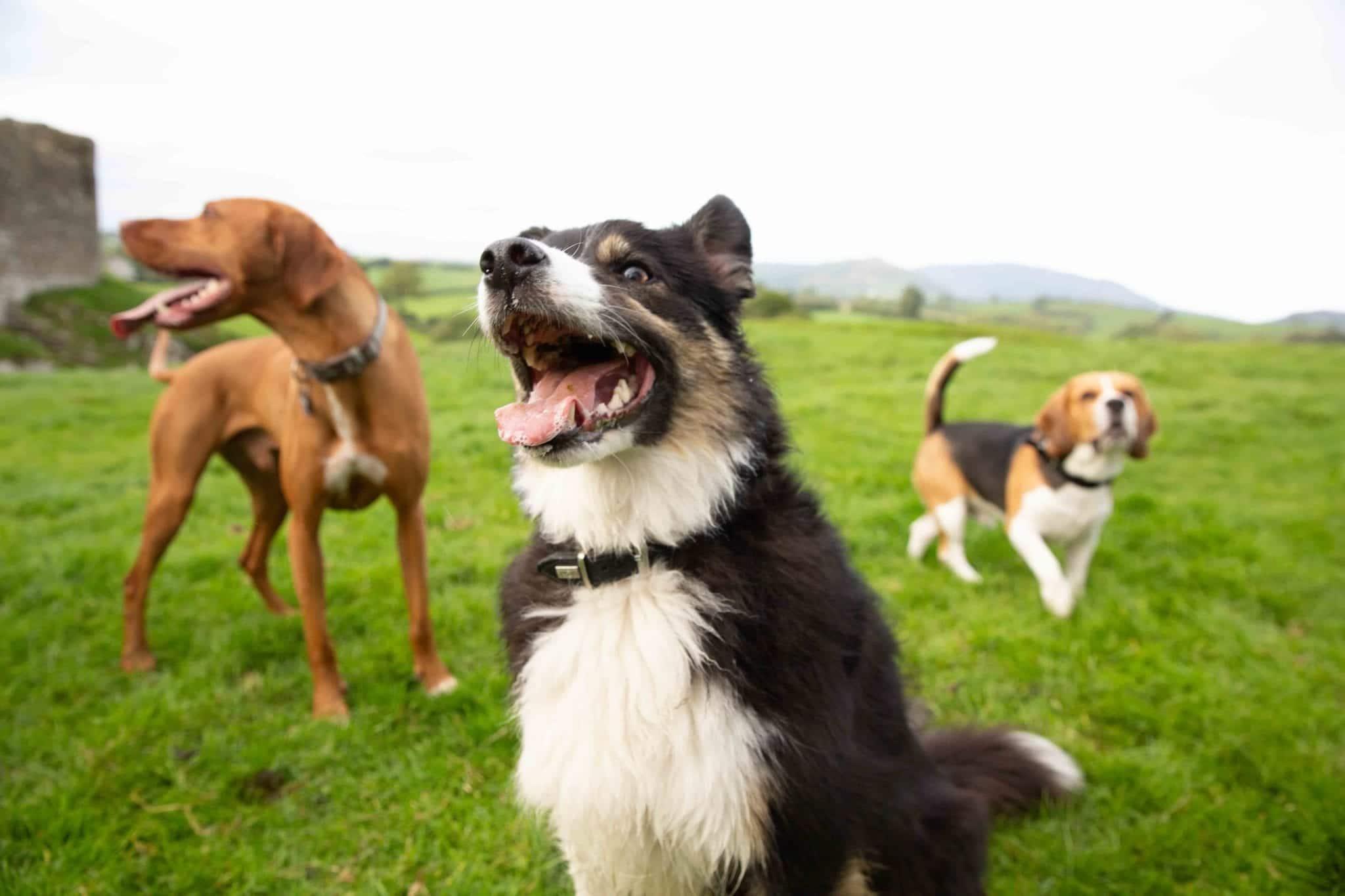 Kauknochen für Hunde4