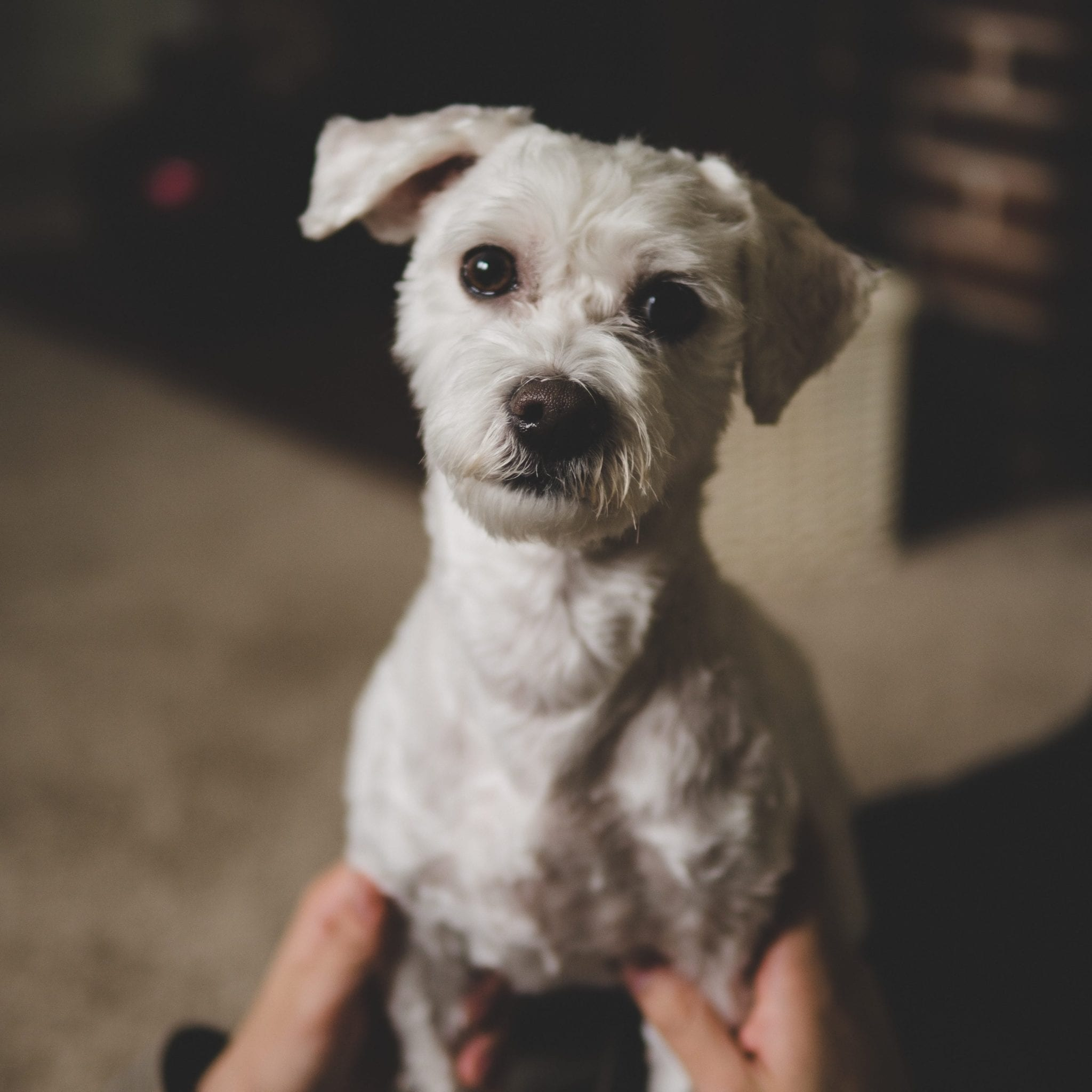 Hundehaltung Tipps