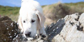 Natürliche Hundesnacks von Irish Pure