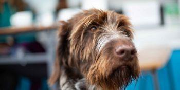 Wie unterstütze ich das Immunsystem meines Hundes?