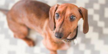 Darmgesundheit bei Hunden