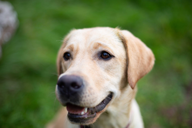 Hundeernährung - Was muss ich wissen?
