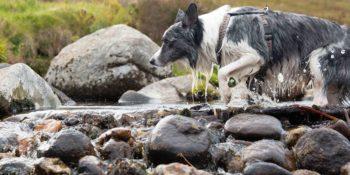 Unser Premium Hundefutter - Irish Pure