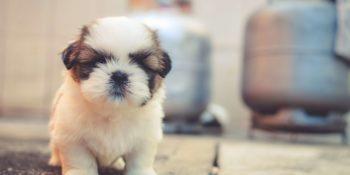 Eine artgerechte und ausgewogene Hundeernährung