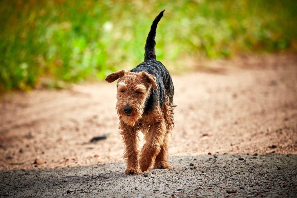 Hundefutter ohne Getreide Cover