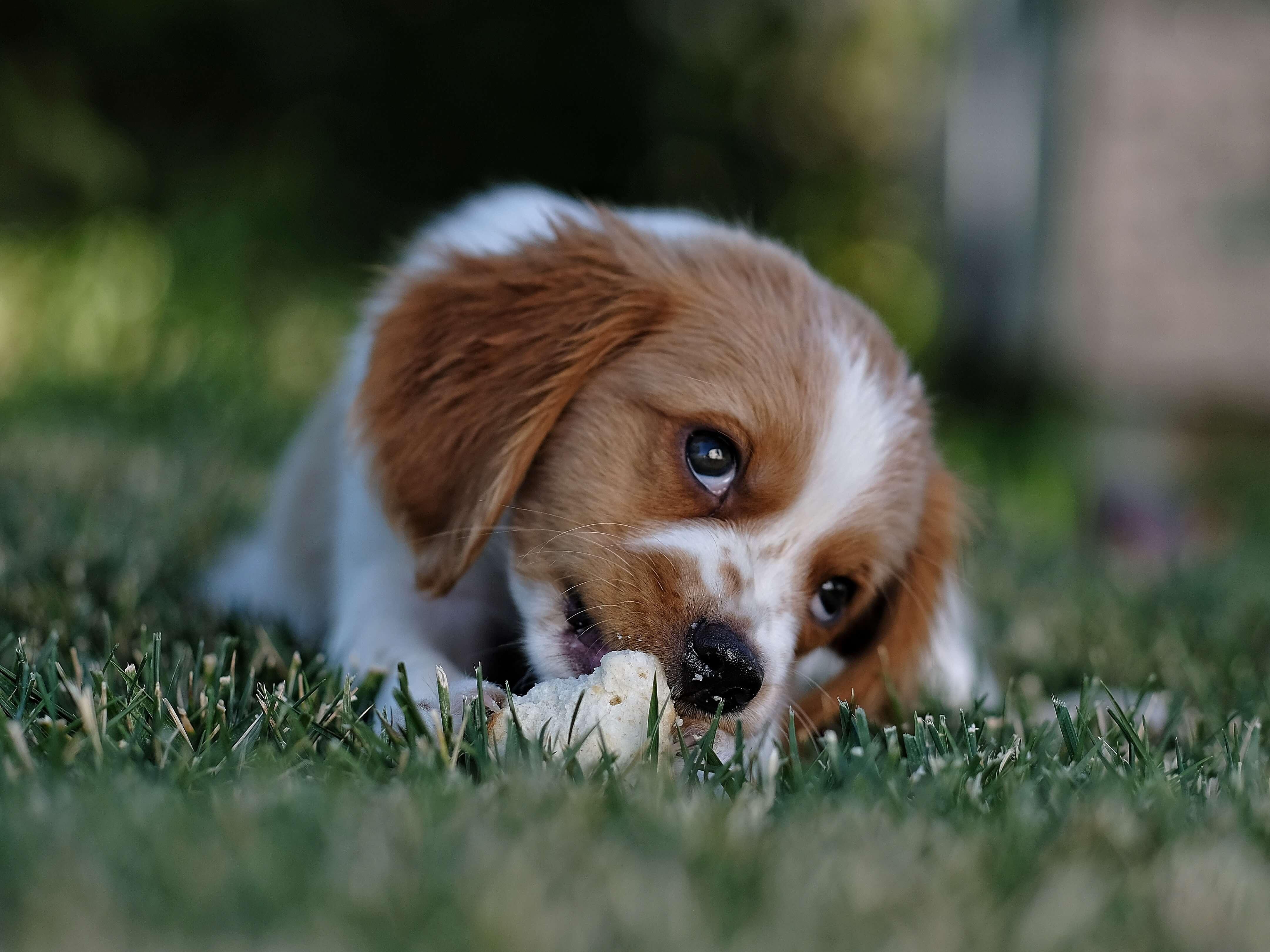 Fütterungszeit Hund