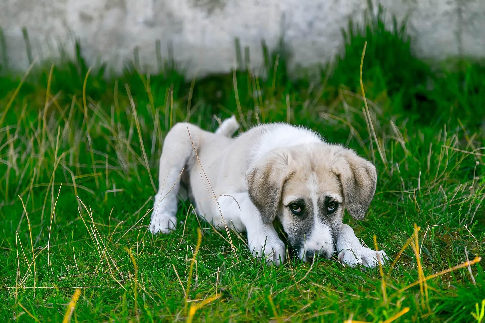 Allergiefreies Hundefutter Irish Pure