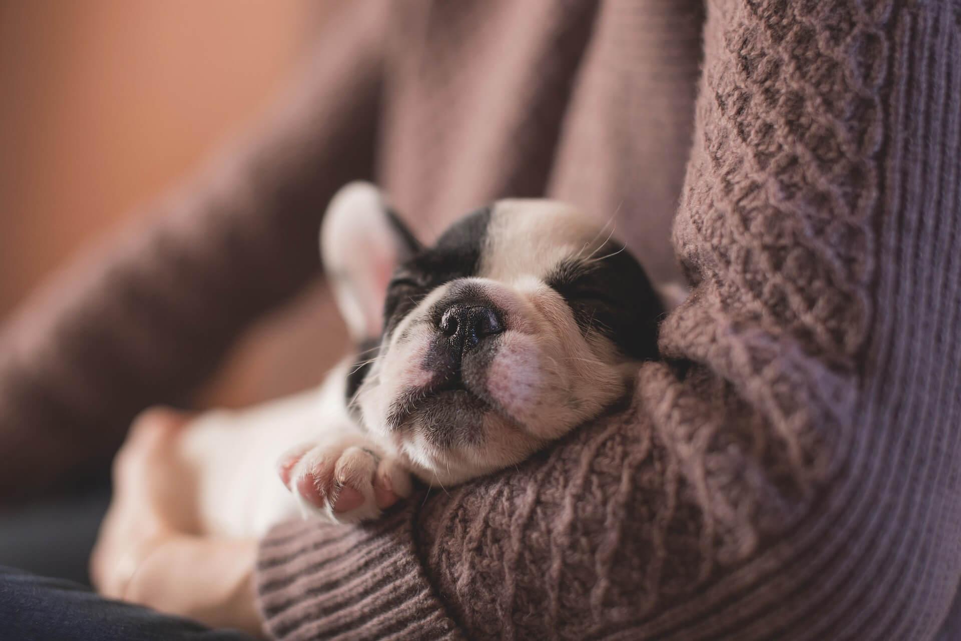Was ist eigentlich gutes Hundefutter? Irish Pure Blog