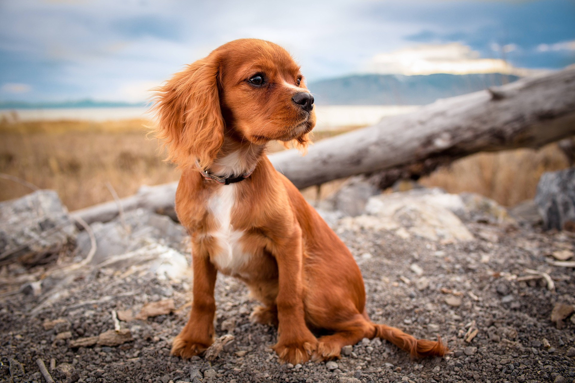 Warum fressen Hunde Gras? Irish Pure Blog