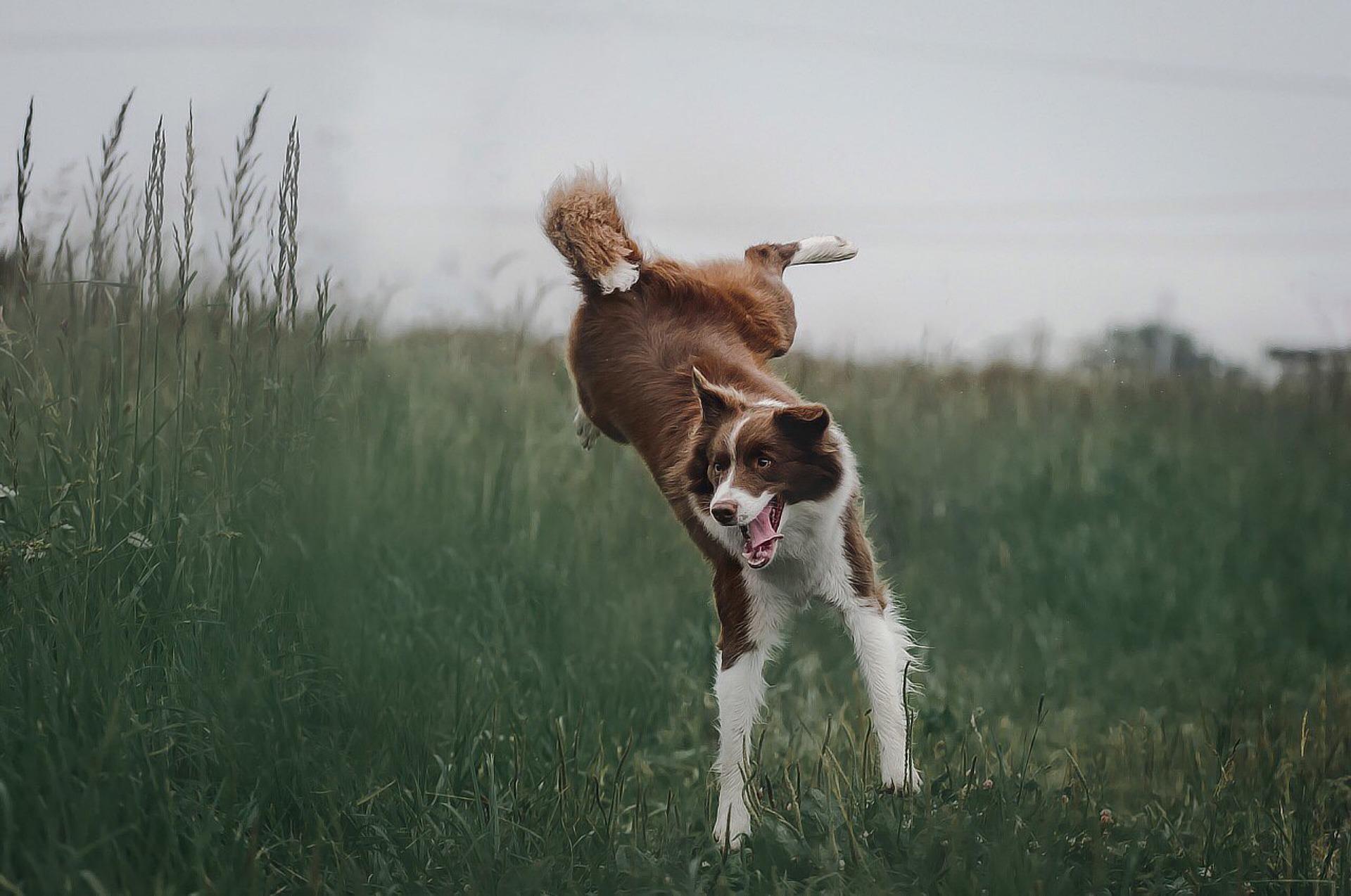 Verdauliches Hundefutter