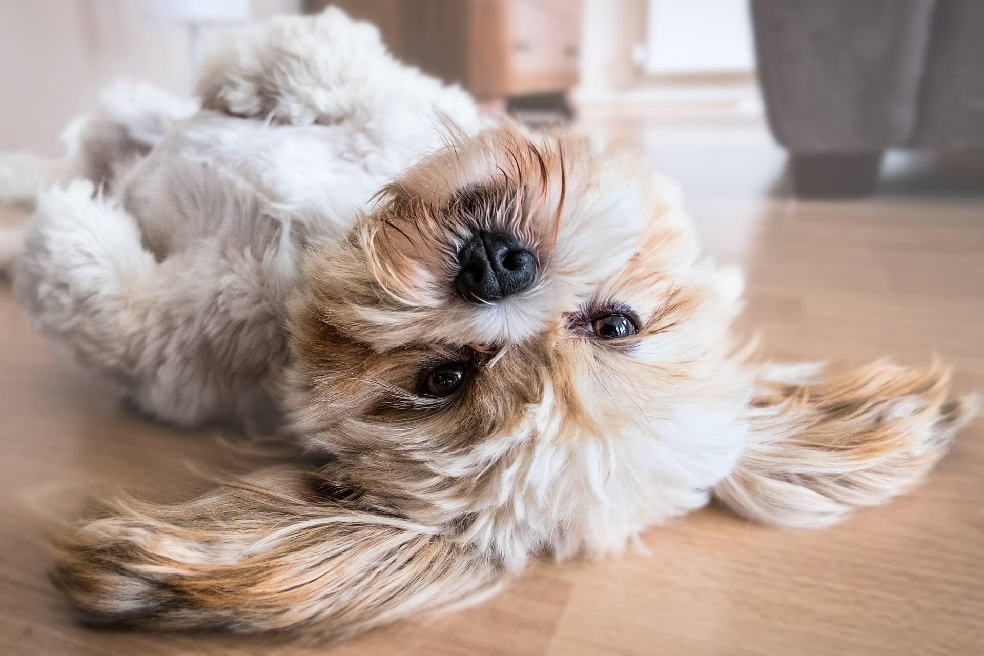 Was sagt die moderne Lehre der Hundefütterung über den Fleischanteil?