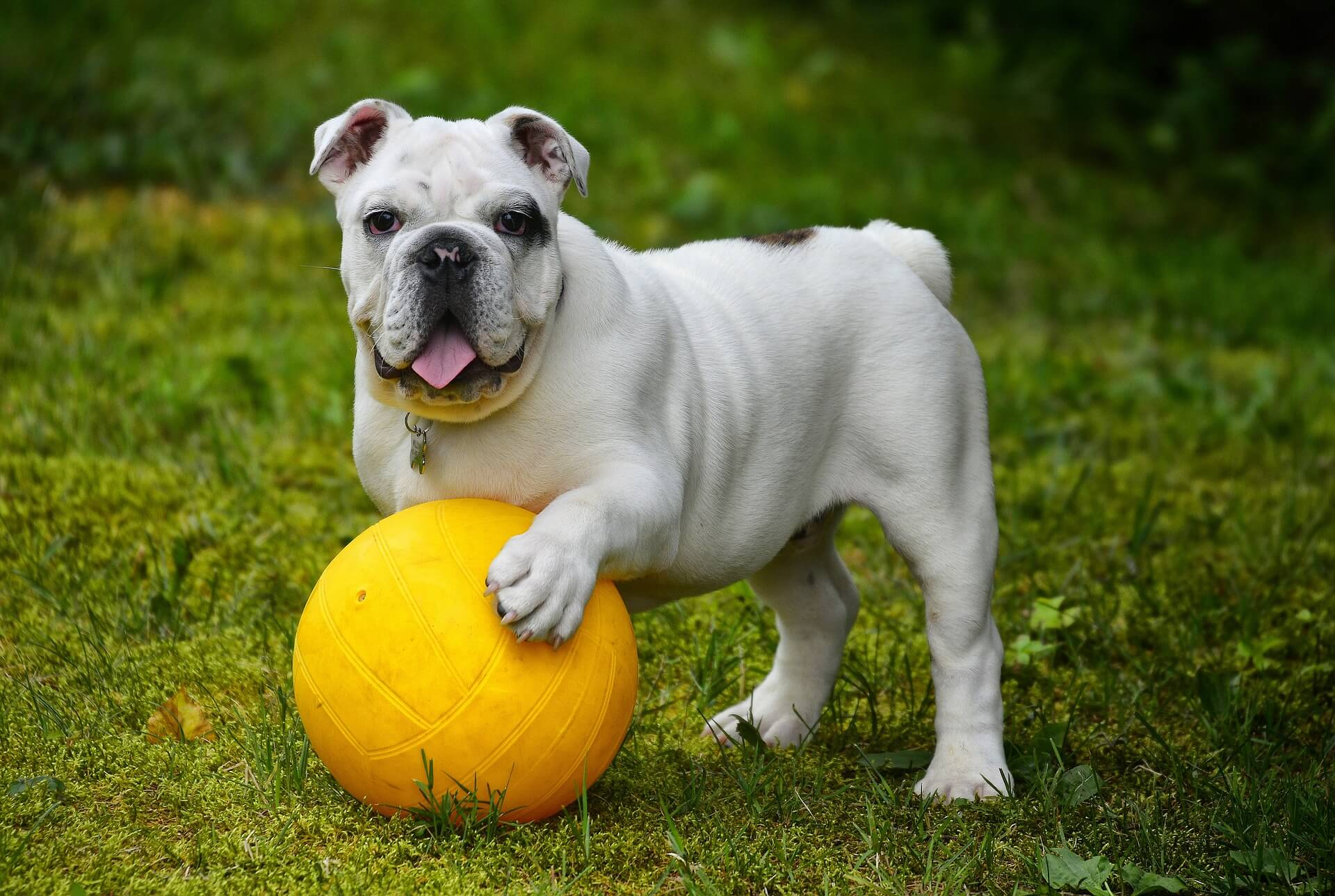 Ernaehrung Hunde Alter