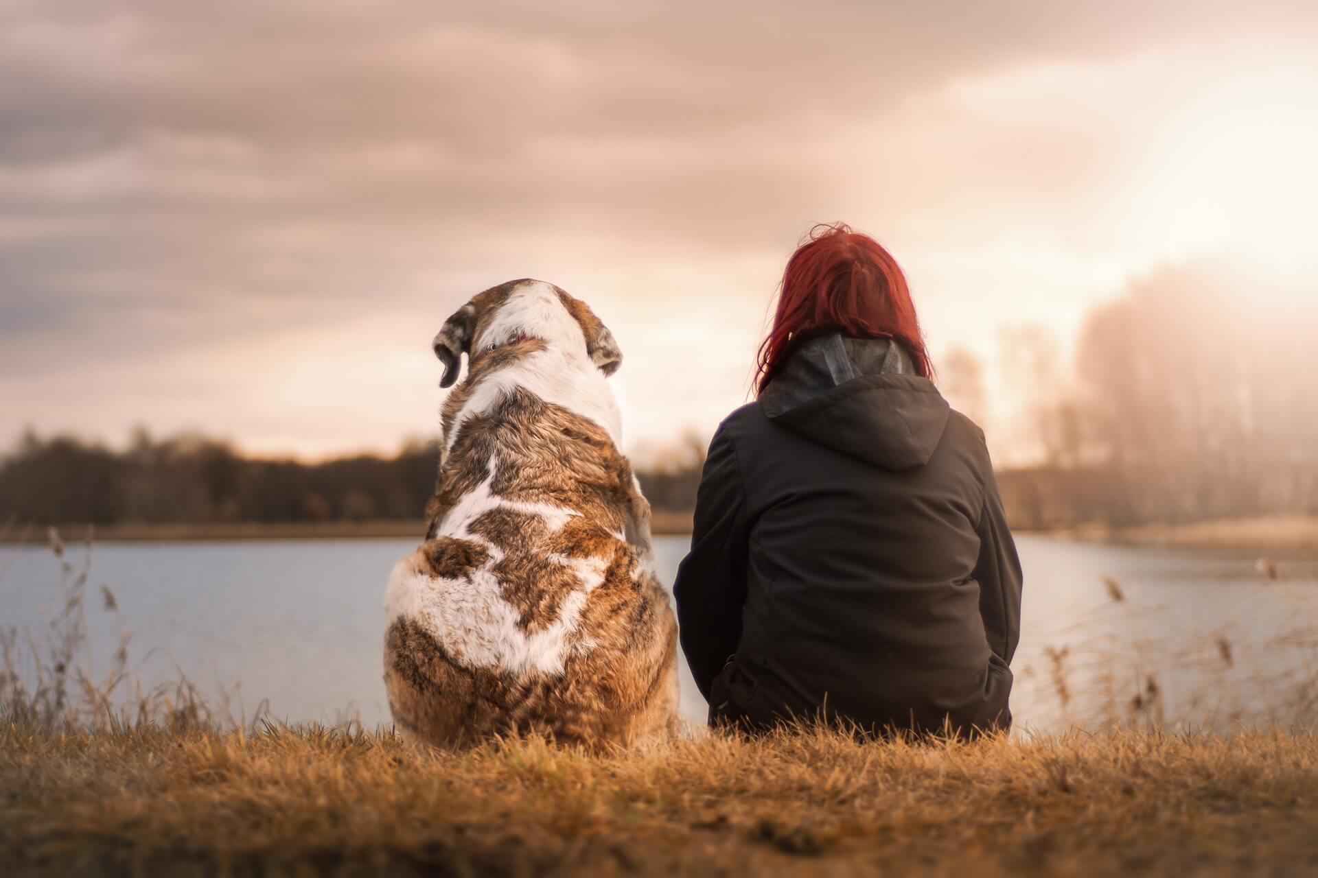 Richtige Trockennahrung für den Hund