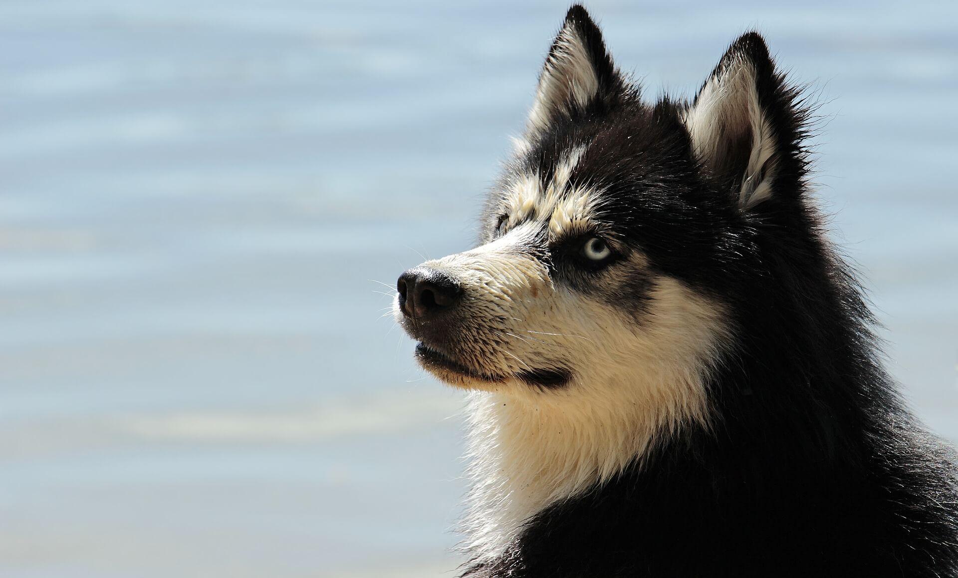 Rohstoffe im Hundefutter