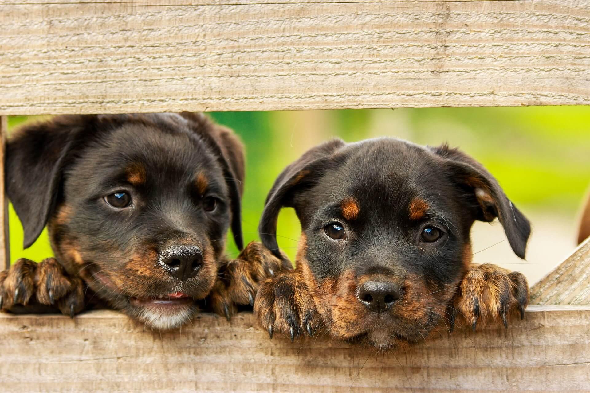 Nachteil an Getreide im Hundefutter
