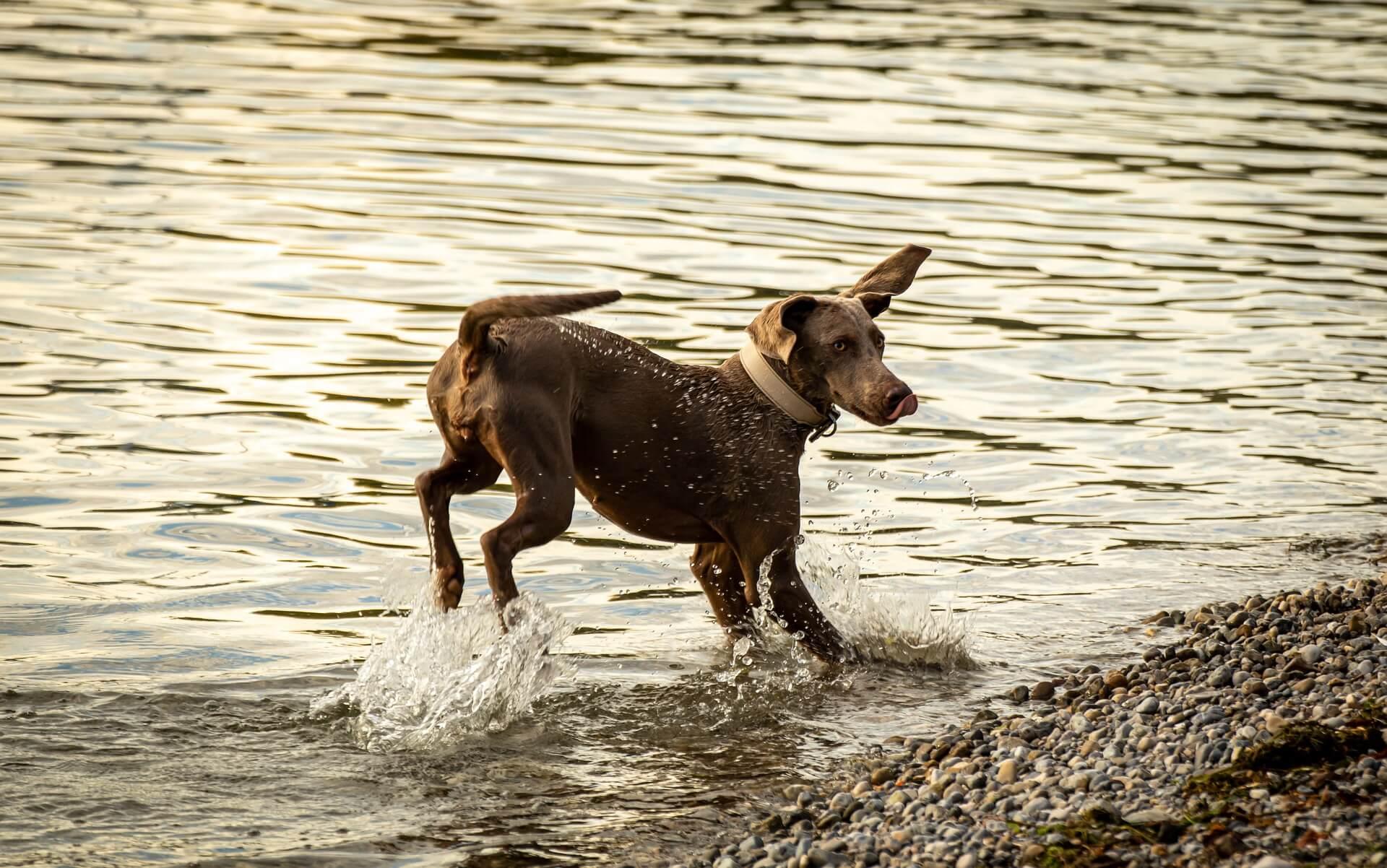 Checkliste für Hundefutter mit hohem Fleischanteil