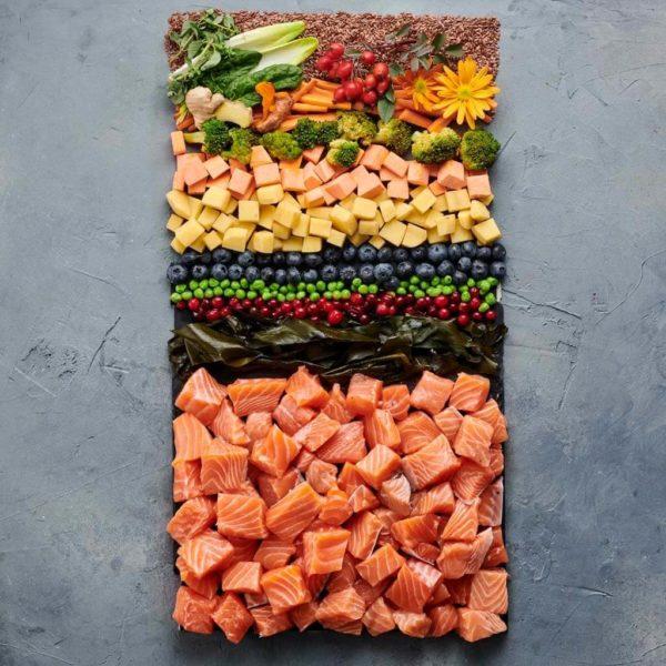 Lachs-Premium-Trockenfutter